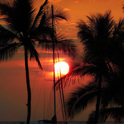 freetoedit palmtrees sailboat hawaii sunset pcpalmtrees pccolorfulsummer pctravel