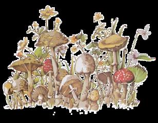 nature art mushrooms fungi outdoors freetoedit