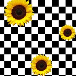 freetoedit vans white black yellow