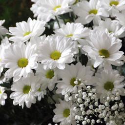picsart flowers white whiteflower freetoedit