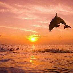 freetoedit sunset dolphin photography