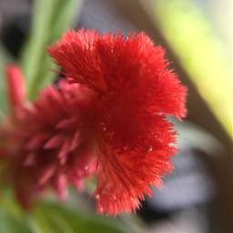 garden flower macrography nature fullcolor freetoedit