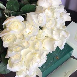 picsart rolex flowers white whiteflowers freetoedit