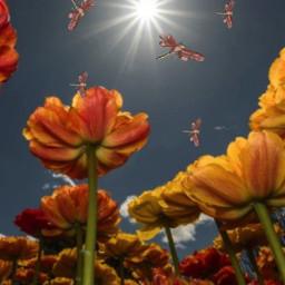 vipshoutout flowers dragonflies sunshine madewithpicsart freetoedit