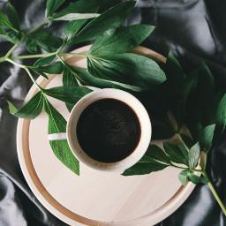 coffee drink flatlay aesthetic plant freetoedit