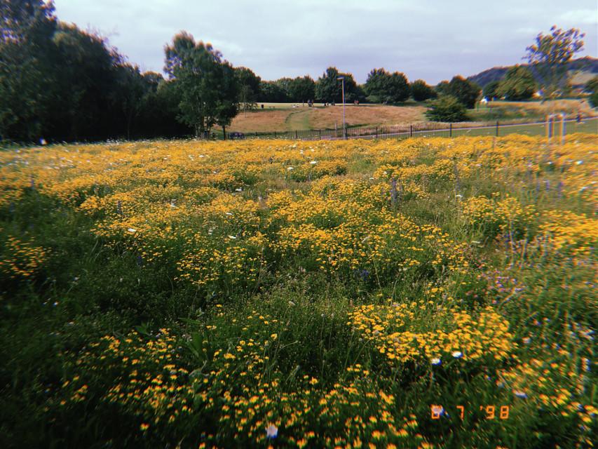 💐☘️  #myphoto #yellow #flowers #aesthetic #photography #hujicam
