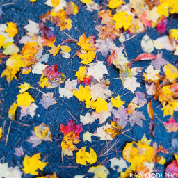 nature colorfulleaves