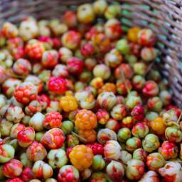 freetoedit berries naturephotography wildberries nature
