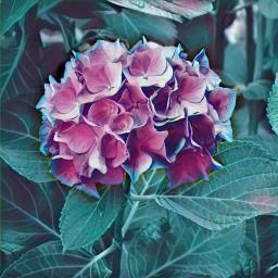 freetoedit flower flowers