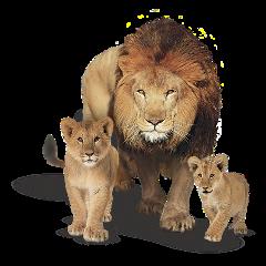 decor animals lions freetoedit