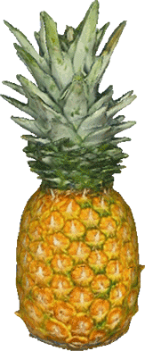 scpineapples pineapples stickers picsartstickers ananas freetoedit