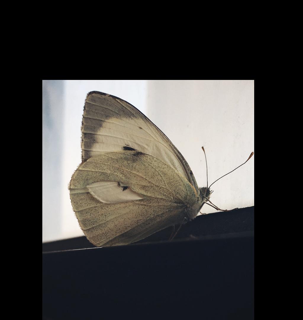 #butterfly sticker