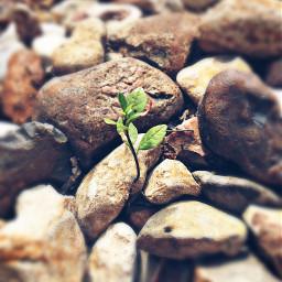 justsprouting smallbeginnings