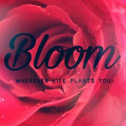 freetoedit bloom whateverlifeplantsyou lovelyscenesphotography photography