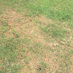 remixit addstuff freetoedit grass vegetation