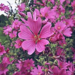 nature flower flowerpower magiceffectmoonlight freetoedit