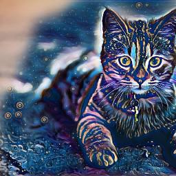 cat cute love freetoedit