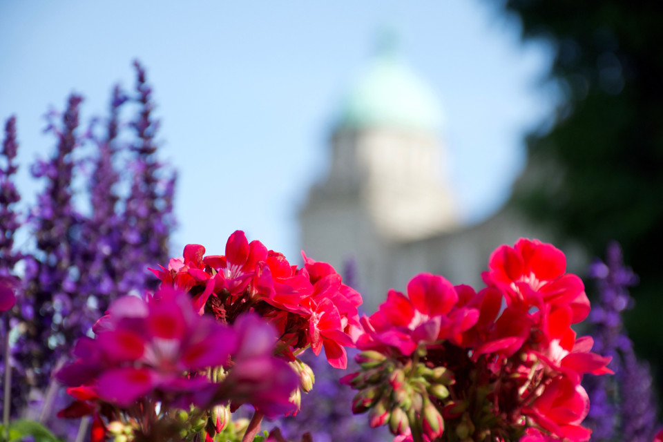 parliament building view 💐 #flowers #flower #canada #victoria #vacation #summer #color #nature #aperture #freetoedit