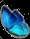 butterfly blue bluebutterfly vsco mystery