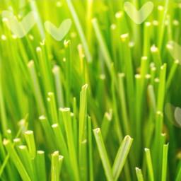 freetoedit grass green luck sunny
