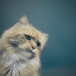 cat cats kitty animal pet freetoedit