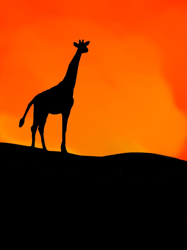 #freetoedit #jungle #giraffe