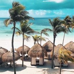 picsart nature palmtrees sea summervibes freetoedit