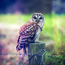owl nature louisiana