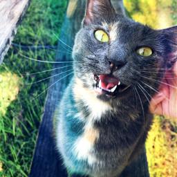 cat tortoiseshell summer