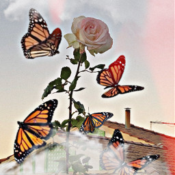 freetoedit rose rosegold roses butterfly