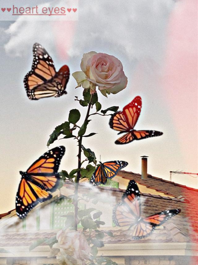 #freetoedit #rose #rosegold #roses #butterfly #aesthetic #aesthetictumblr #aesthetics #love #hearteyes #heart #ily #ilysm #butterflyremix