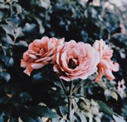 #catcuratedrose,#catcuratedtulip,#catcuratedsunflower,#catcuratedbouquet,#catcuratedflowers