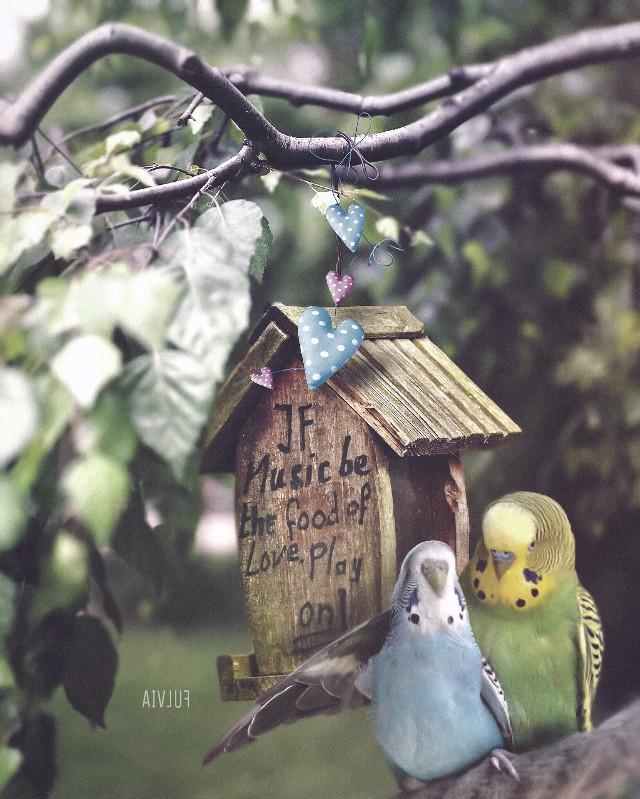 𝑰𝒇 𝒎𝒖𝒔𝒊𝒄 𝒃𝒆 𝒕𝒉𝒆 𝒇𝒐𝒐𝒅 𝒐𝒇 𝒍𝒐𝒗𝒆 .. 𝒑𝒍𝒂𝒚 𝒐𝒏 !! 😍🎶😁 🎵🎶🌟❤️  Op by Unsplash /pixabay  parrots found on google . Edited by me @lillobalillo   https://youtu.be/zuzTHxOR4C0   #doubleexposure #madewithpicsart #edited #editedwithpicsart #fantasy #animallover #texture #cutouttool #picsarteffects #picsarttools #myedit