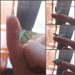 fairy butterfly green