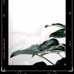 picsart freetoedit contrast simplicity visualsoflife