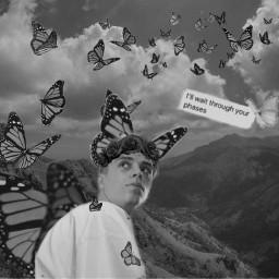 beanz prettymuch prettymuchaustin austinporter monarchbutterfly freetoedit