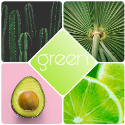 freetoedit green cactus cacti lime