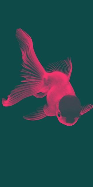 #freetoedit #Retro #GoldFish