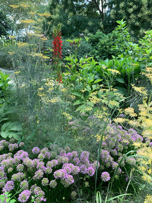 #citygarden #flowers #foilage #summer #delicate #lines #shapes #color