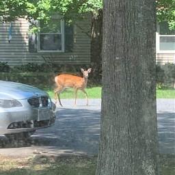 natureporn loveofnature nature deerhunting deer freetoedit