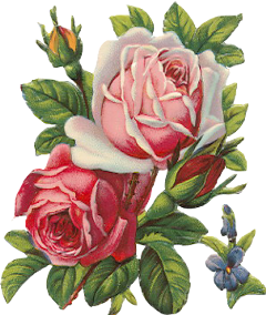 flowers flowerstickers stickers overlays aesthetic freetoedit
