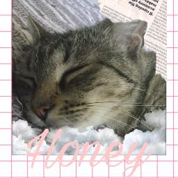 freetoedit cat becrearive