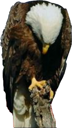 freetoedit eagle praying sad kellydawn