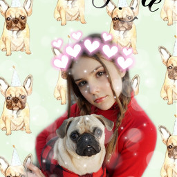 frank pug piperrockelle love dogs freetoedit