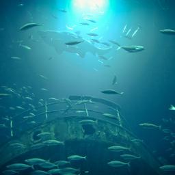 ozeaneum stralsund ostsee lumia950xl freetoedit