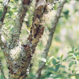 filmphotography moss