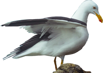 freetoeditremix freetoedit aves birdsphotography bird