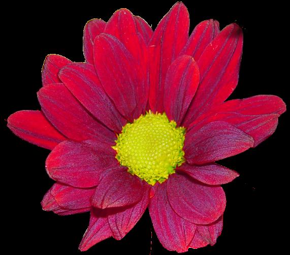 #cuorelucymy #Lucymy #mialu #flowers