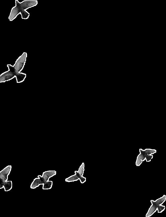 #birdies