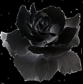 #flower #goreaesthetic #pastelgore #grungeaesthetic